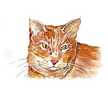 Ginger Tabby Photographic Print