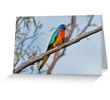 Scarlet-chested Parrot Greeting Card