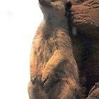 CHeeky Meerkat by Yami2ki