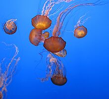 Dance of the Jellies 3 by Mandy Brown