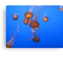 Dance of the Jellies 3 Canvas Print