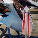 Lunch Pelican Style (Big Bird Small Fish) by Eve Parry