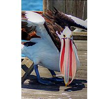 Lunch Pelican Style (Big Bird Small Fish) Photographic Print
