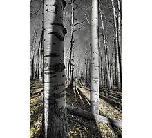 The Last Signs of Fall  Photographic Print