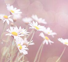 Dreamy Daisies by Linda Lees
