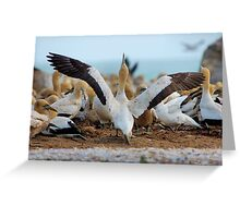 YES, I AM READY FOR MY FIRST TAKE OFF, REACH FOR THE SKY ! Cape Gannet {Morus capensis}, Bird Island, Lamberts Bay, South Africa Greeting Card
