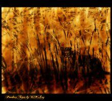 Panthera Tigris, essence by xplor-r