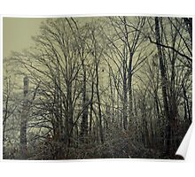 Icy Trees Poster