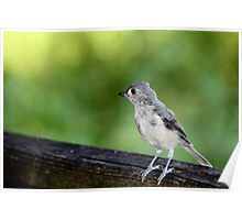 Little Gray Bird Poster