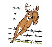 Deer Leaping Barb Wire Fence Photographic Print