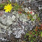 U.P. Lichen by Polly Greathouse