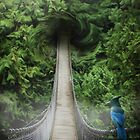 Lynn Canyon , suspension bridge by Cliff Vestergaard