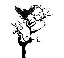 Black Owl 7 Photographic Print