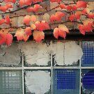 forgotten window by Lynne Prestebak
