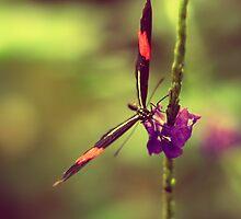 flutterby by Rebecca Tun