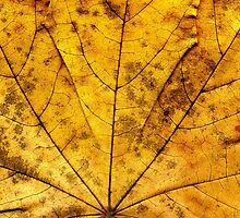 Detailed Fall Maple Leaf Texture 11 by AnnArtshock