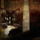 Renaissance cat by Lynn Starner