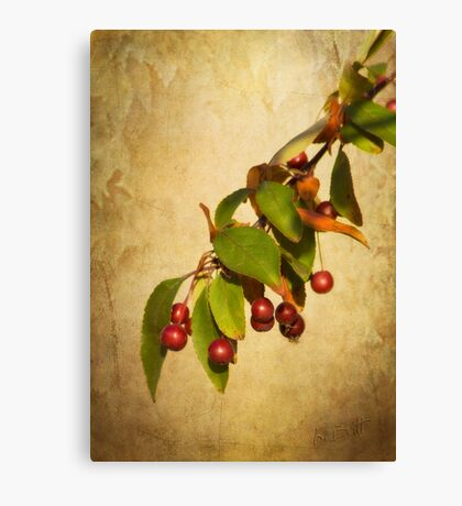 Autumn Fruit Canvas Print