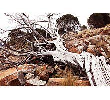 Nubeena, Tasmania, Australia, coastal driftwood Photographic Print