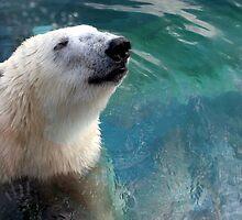 Polar Bear by Laurel Talabere