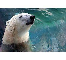 Polar Bear Photographic Print