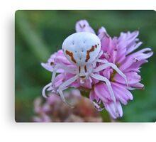 Crab-Spider Canvas Print