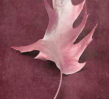 one leaf by Iris Lehnhardt