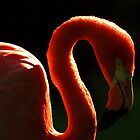 Flamingo Dreams by Rob Fenn