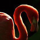 Flamingo Dreams by Rob Fenn