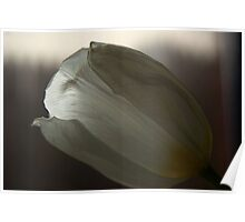 White Daffodil Poster