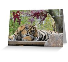 Beautiful Tiger Photo - animal lovers Greeting Card