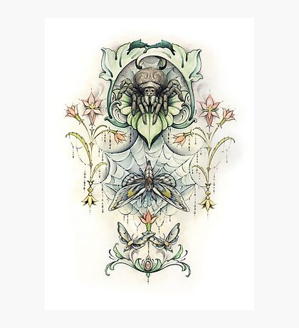 Antique pattern - Spider and Moths Photographic Print