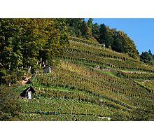 Glottertal vineyard Photographic Print