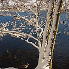 Winter by the lake by Ulla Vaereth