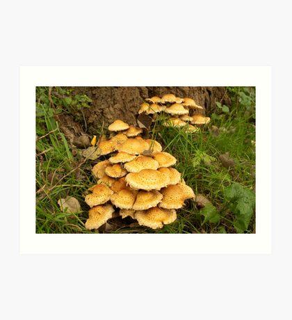 Golden mushroom village Art Print