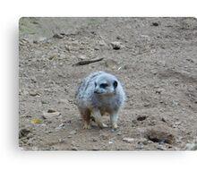 Cute Meerkat - animal lover Canvas Print