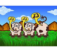Singing Cows Photographic Print