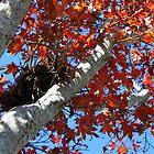 Fall by beccamay