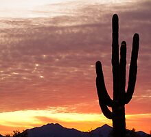 Arizona Saguaro Sunrise by Bo Insogna