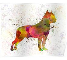 American Staffordshire Terrier in watercolor Poster