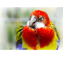 Eastern Rosella Photographic Print