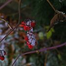 First Snow with Red Berries (1) by goddarb