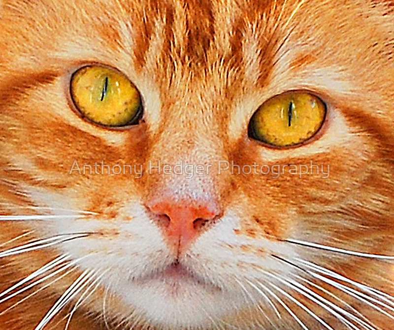 Ollie - Up close and personal by Anthony Hedger Photography