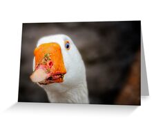 Domestic Goose Greeting Card