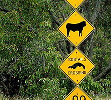 Kangaroos, cattle, bobtails and snakes by myraj
