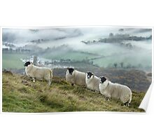 Early morning mists and sheep on Longside edge, near Skiddaw Poster