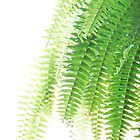 Fern-Green by Randall Robinson