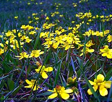 Spring at Last! by rocamiadesign