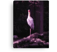 Soilder White Crane Canvas Print