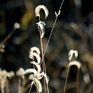 November Breeze by Vicki Pelham